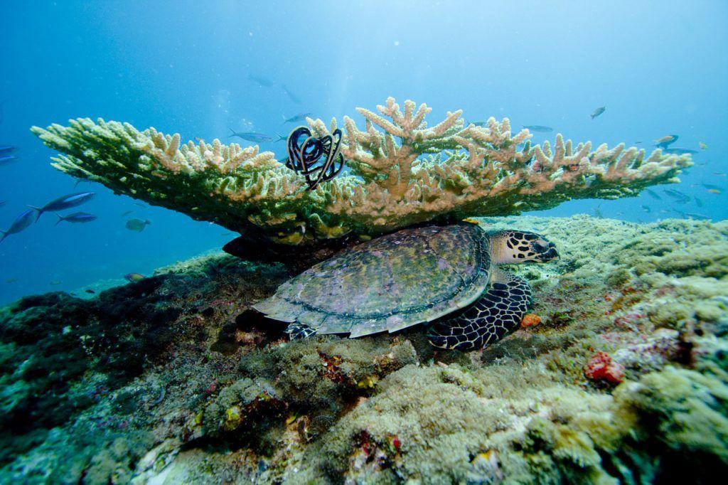 Vista submarina Islas Maldivas
