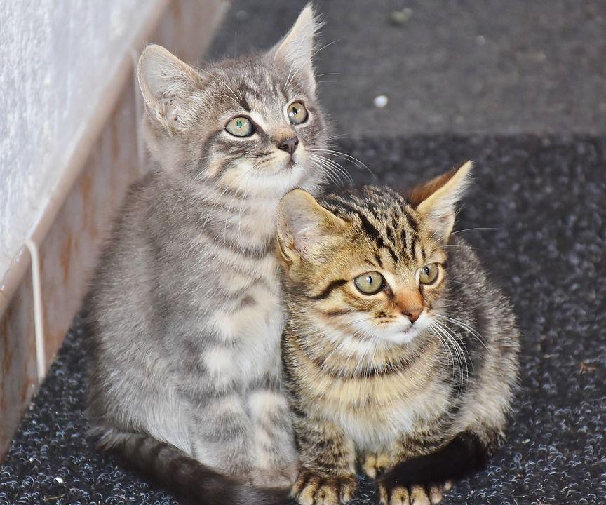 Pubs para amantes de los gatos