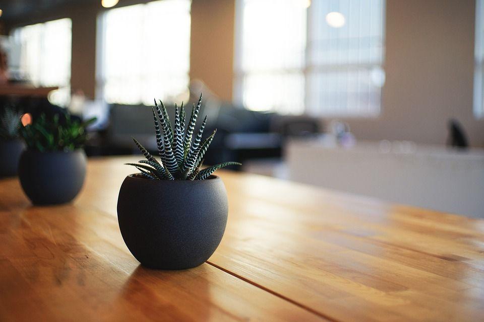 Utiliza plantas para decorar tu restaurante